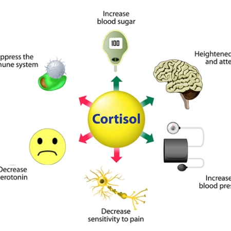 cortisol-functions-640x460-1