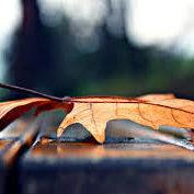 blad op tafel